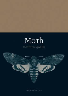 Moth by Matthew Gandy