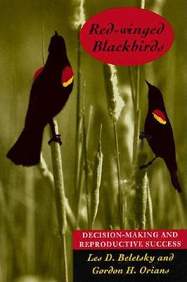 Red-winged Blackbirds by Les D. Beletsky