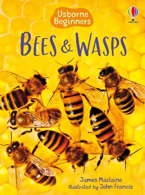 Bees and Wasps by James Maclaine