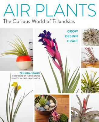 Air Plants by Zenaida Sengo