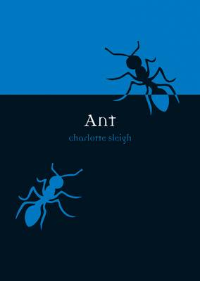 Ant by Charlotte Sleigh