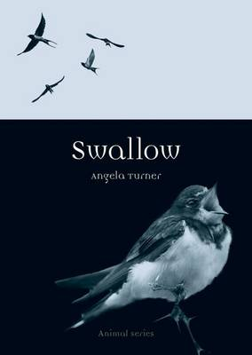 Swallow by Angela Turner