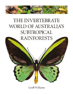 The Invertebrate World of Australia's  Subtropical Rainforests by Geoff Williams