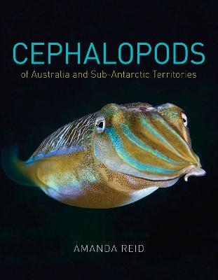 Cephalopods by Amanda Reid
