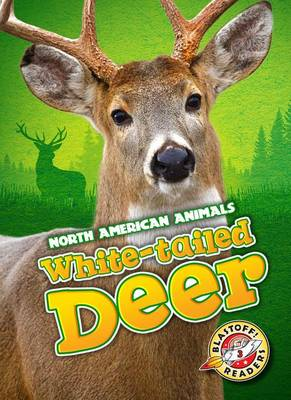 White-Tailed Deer by Chris Bowman