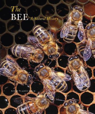 The Bee by Noah Wilson-Rich
