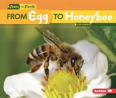 From Egg to Honeybee by Lisa Owings