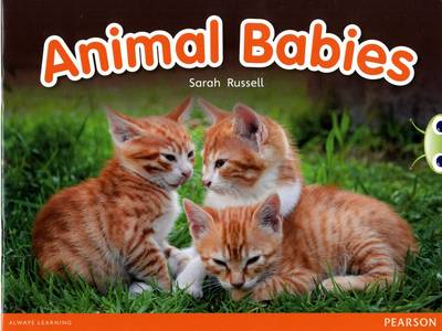 Bug Club Non-fiction Red B (KS1) Animal Babies by Sarah Russell