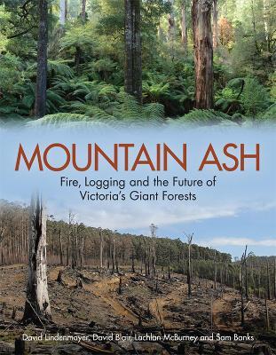 Mountain Ash by David Lindenmayer