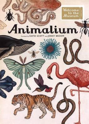 Animalium Welcome to the Museum by Jenny Broom