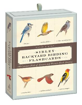 Sibley Backyard Birding Flashcards book
