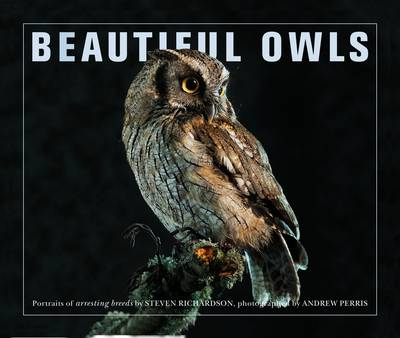 Beautiful Owls by Marianne Taylor