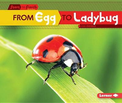 From Egg to Ladybug by Lisa Owings