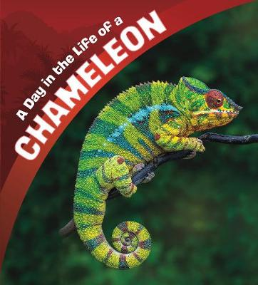 A A Day in the Life of a Chameleon by Lisa J. Amstutz