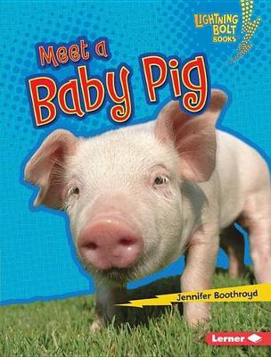 Meet a Baby Pig by Jennifer Boothroyd